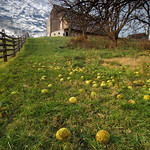 Osage Oranges and Barn